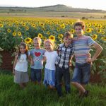 The family and the field of sunflowers