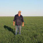Peter standing in his young green spelt crop