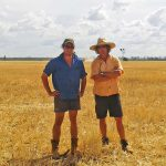 Angus &Myles in the field of wheat - in the background the harvester raises dust