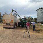 拍摄小麦的装载