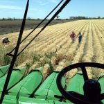 Graham out in the wheat with Peter while Gordo films