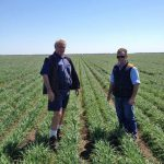 Mike and Rob inspecting the young wheat crop