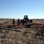 After the harvest Mike mulches the remaining stalks (the stubble) back in to improve soil fertility