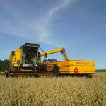 Harvesting the oats