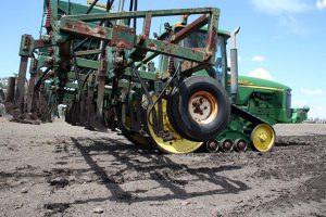 Preparing to plough and plant the millet seed