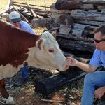 Rob, our grain buyer, makes friends with Pebbles