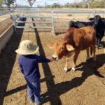 牛にあいさつをするリッキー