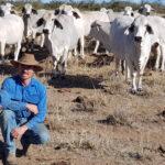 マット――囲い地で牛をバックに