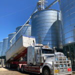 検査が済んだ小麦は、トラックの荷台からサイロへ